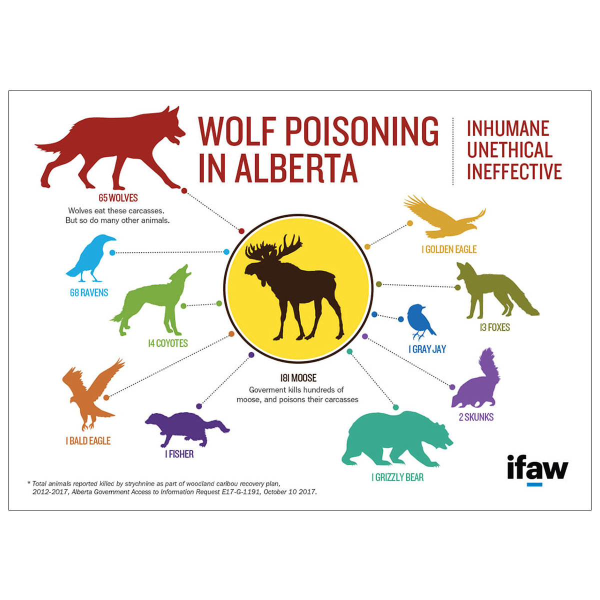IFAW wolf poisoning in Alberta infographic